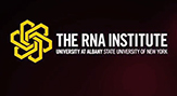 New visual image of The RNA Institute at UAlbany