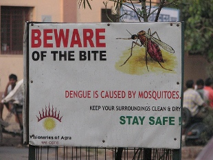 sign warning that mosquitoes spread dengue fever