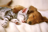 Photo of dog and cat sleeping