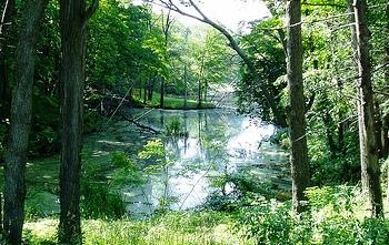 UAlbany Indian Pond