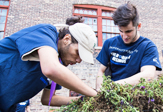 LLC Students volunteer in Albany building an urban garden