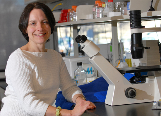 UAlbany Stem Cell Biologist Sally Temple