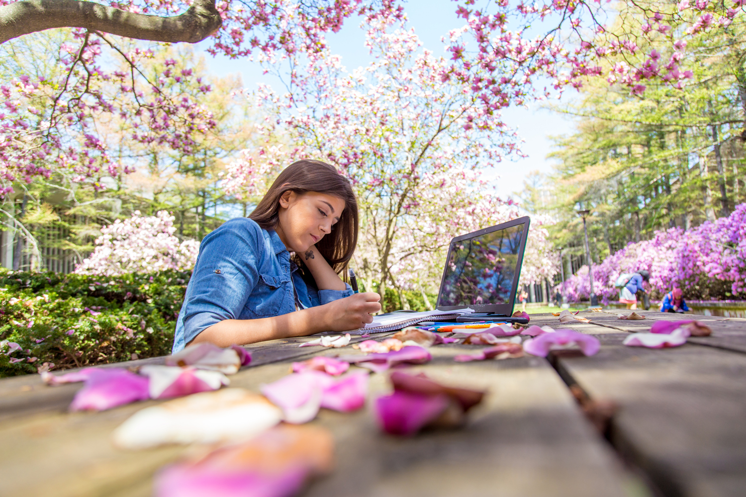 Student studying on her laptop in the UAlbany azalea garden