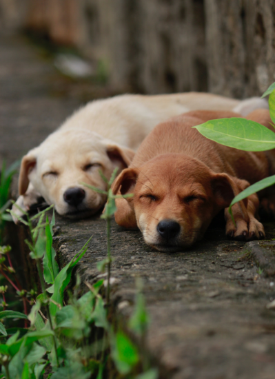Two dogs laying on stone floor outside