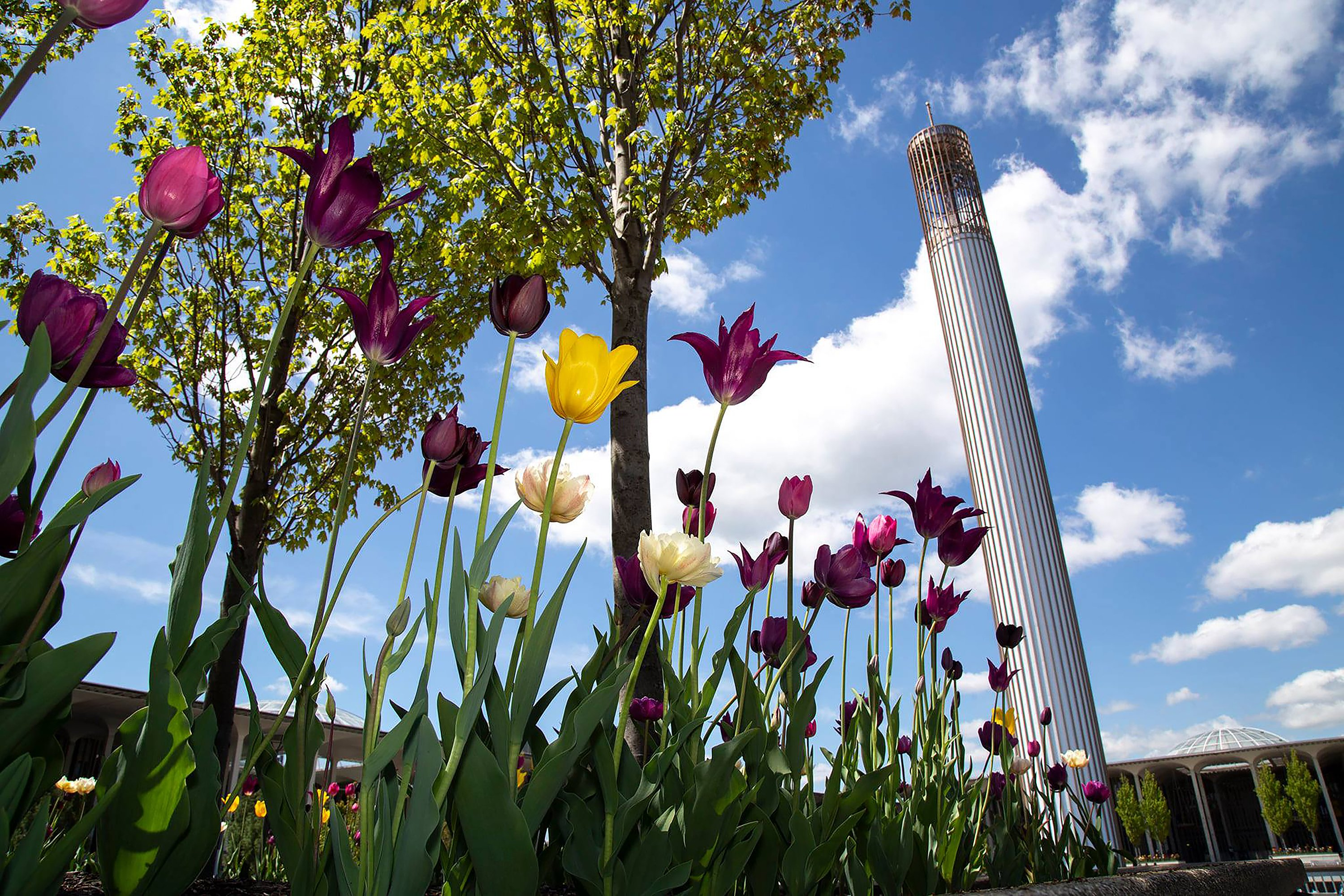 Ualbany Calendar Spring 2022.Ualbany Embraces Spring With Renewed Activities University At Albany