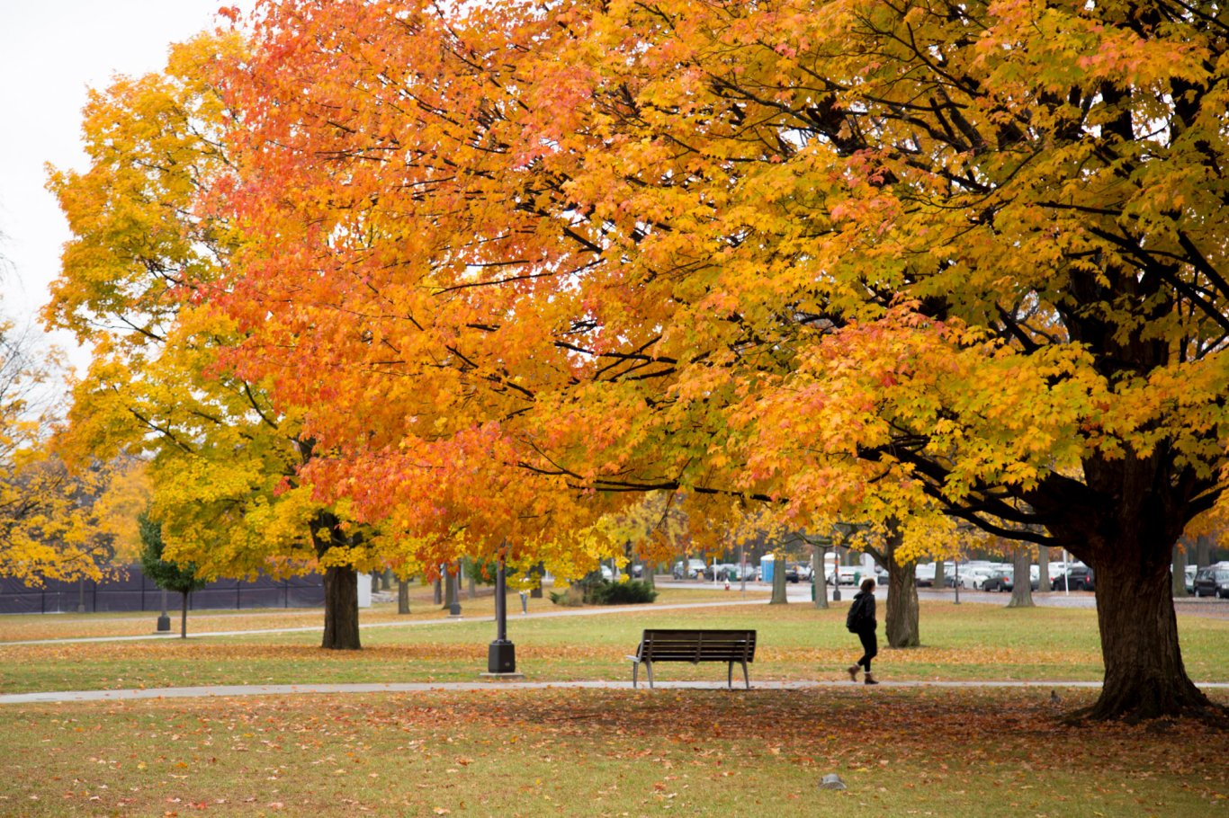 A student walks across campus amidst the fall foliage.