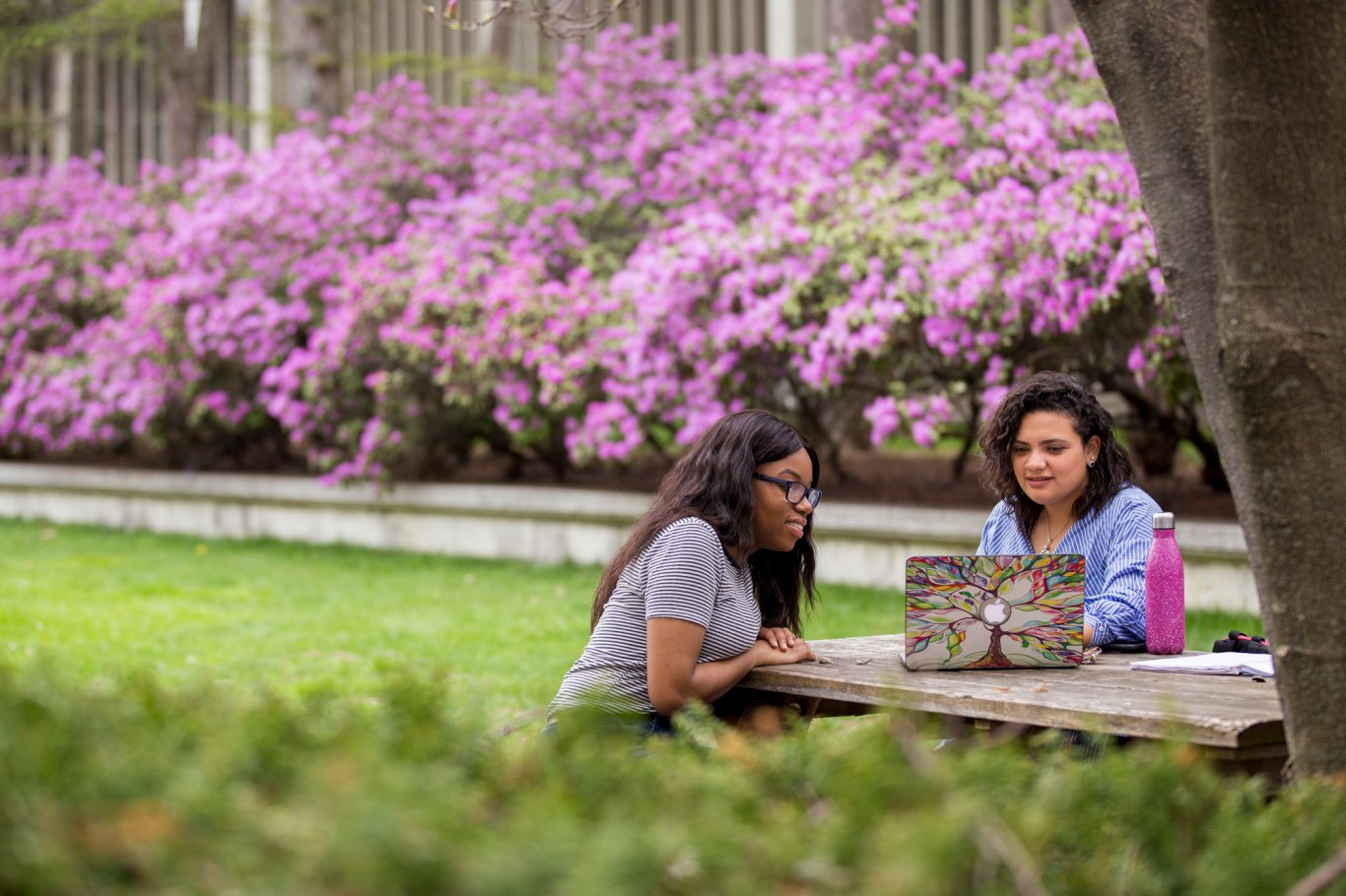 Two students study outside on UAlbany's Main Campus during the spring bloom.