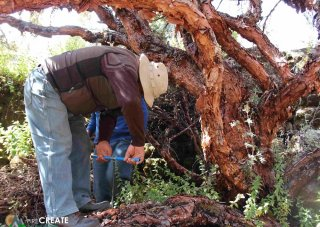 PIRE researchers tour Bolivia collecting samples of centenary trees.